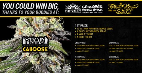 green house seed co win spectacular strain hunters seeds and other swag cannabis seeds store