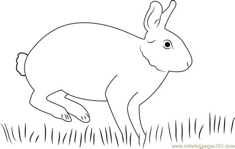 cottontail rabbit coloring page eastern cottontail rabbit coloring page free rabbit