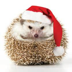 all i want for christmas is an ipod touch and a pet hedgehog abby off the record