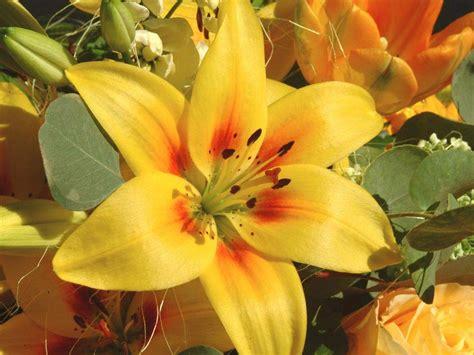fotos de lirios flores picture to pin on pinterest pinsdaddy como plantar l 237 rios plantas delicadas que exigem cuidados