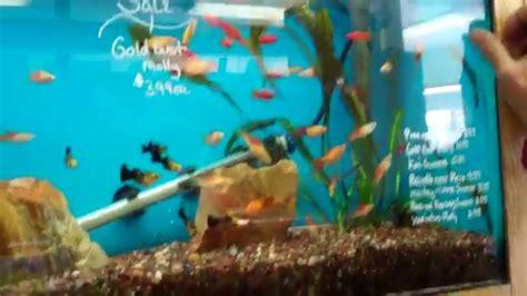 ocean design aquarium reviews pondscape 2012 ocean design aquarium guppies