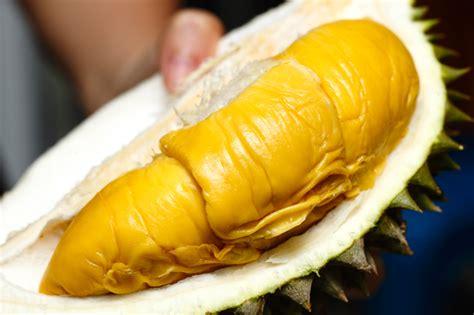 Bibit Durian Musang King Metro this stall in sentul sells musang king durian for as low