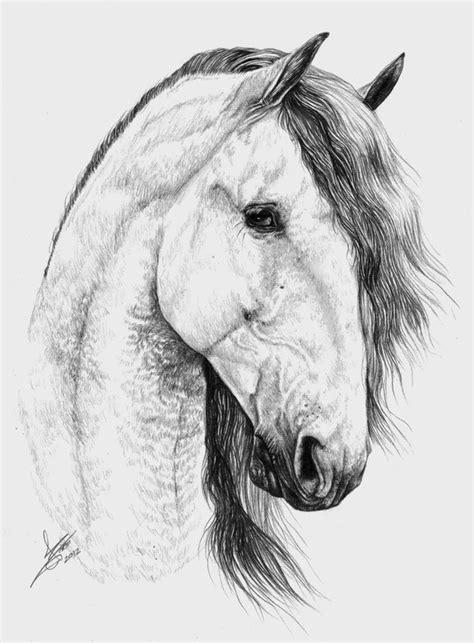 blanco y negro pintura lineal dibujar caballo ilustraci 243 n caballo andaluz por teradiam dibujando