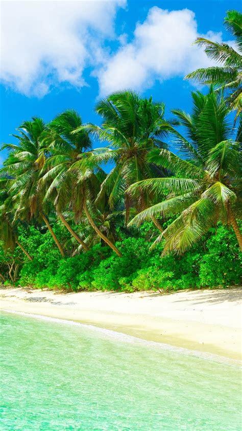 wallpaper tropical paradise beach coast sea palm