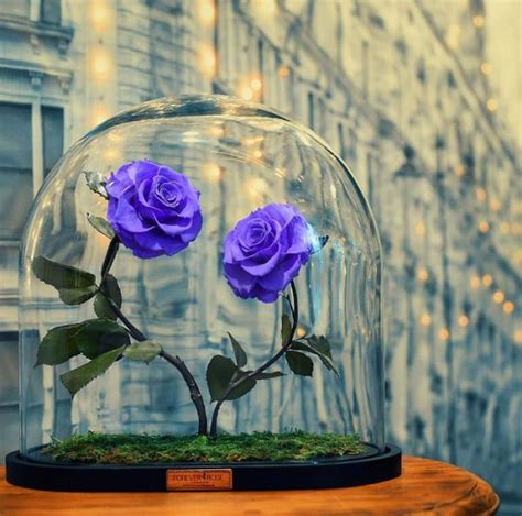 roses that last forever company is selling these 100 roses that last forever without or water