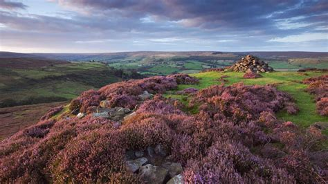 Landscape Photography York Moors Landscape Moor Surprises From Birds To Carnivorous