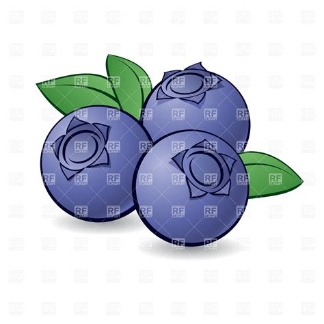 blueberry clipart one blueberry clipart www imgkid the image kid has it