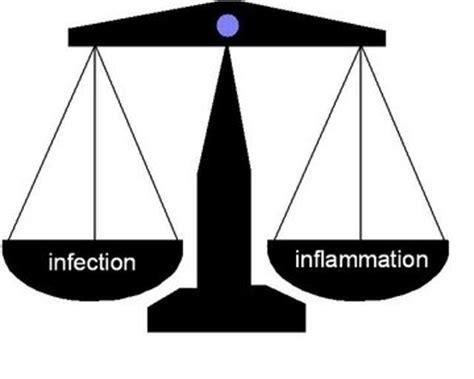innate immunity a question of balance ljubljana slovenia 2006 background and signalling pathway