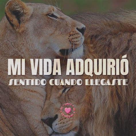 imagenes leones tiernas tiernos leones amorosos con frase de amor corta frases
