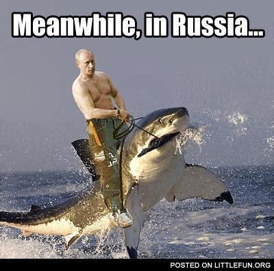 baby shark meme littlefun meanwhile in russia putin on the shark