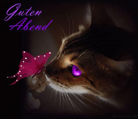 Gute Nacht Katzen Bilder by Guten Abend Nacht Katzen Katzen Fotos Und