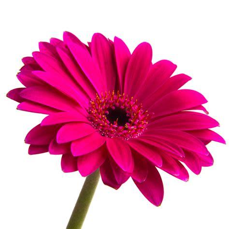pink flower adamtrevor gallery gallery lumix experience