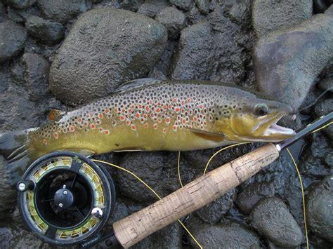pesca acque interne pesca nelle acque interne l abruzzo elimina il tesserino