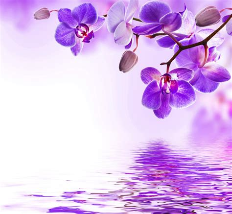 orchid blue water reflection flowers beautiful orchid orchid purple water reflection flowers beautiful orchid
