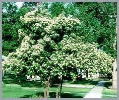 plants for north side of house drew landscaping on pinterest plant catalogs front of houses and pagoda dogwood