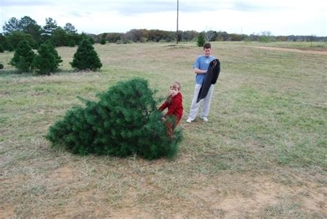 christmas tree farms san antonio evergreen tree farm elgin tx kid friendly activity r trekaroo