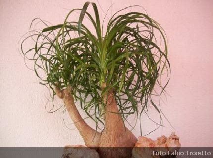 piante ricadenti da interno piante verdi da piante verdi da with piante verdi da