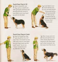 how to a deaf signals sign s for s take a look at pet source s featured sales items shop now