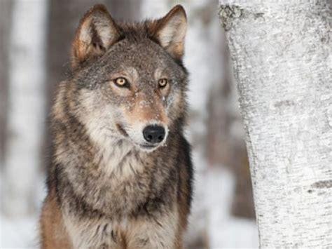 Bilder Speisesã Len by Der Wolf