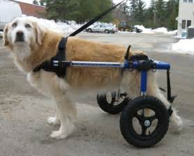 wheel chairs for dogs wheel chair products