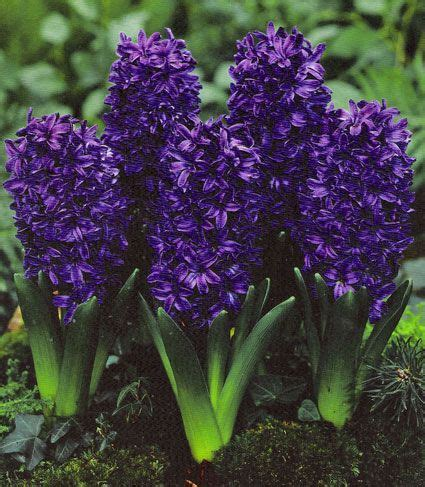 25 best ideas about purple meaning on pinterest purple pictures of purple flowers best 25 purple flowers ideas on