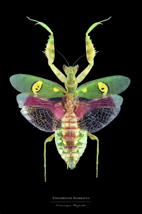 colorful insects beautiful pictures of colouful insects 99inspiration