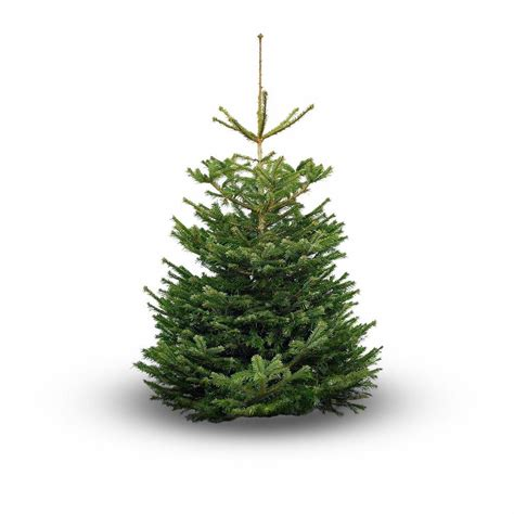 original chriistmas trees nordmann original nordmann tree 150cm
