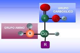 cadena lateral de aminoácidos tipos de amino 225 cidos tipos de