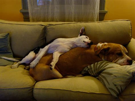 dog on couch monday s pets on furniture part 2 desire to inspire