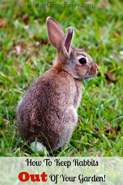 how to keep rabbits out of your garden secret garden pinterest gardens and rabbit