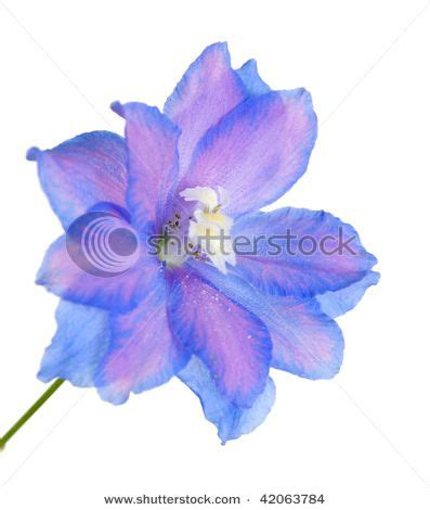 july birth flower tattoo july birth month flower for miss m would get this only