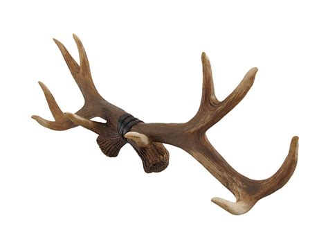 lifelike deer antlers rack decorative wall hook ebay