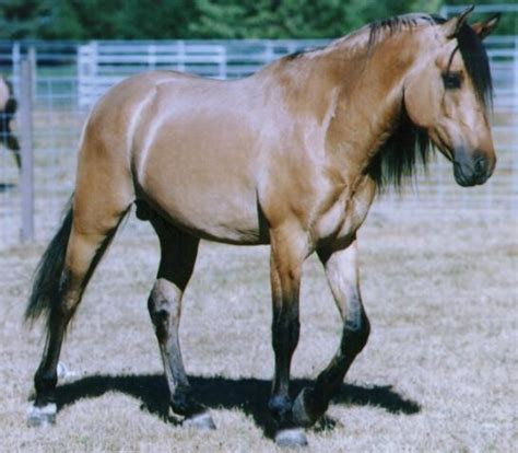 kiger mustang adoption kiger mustang this is the exact i want a