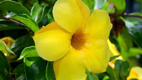 len yellow möbel geniales flores en hd cuarta parte im 225 genes taringa