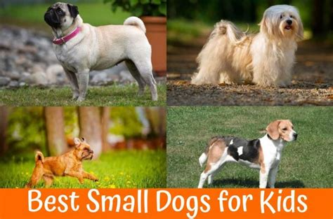 small house dogs good with kids best house dogs small 28 images vad 228 r ditt betyg i matte quizme se best small