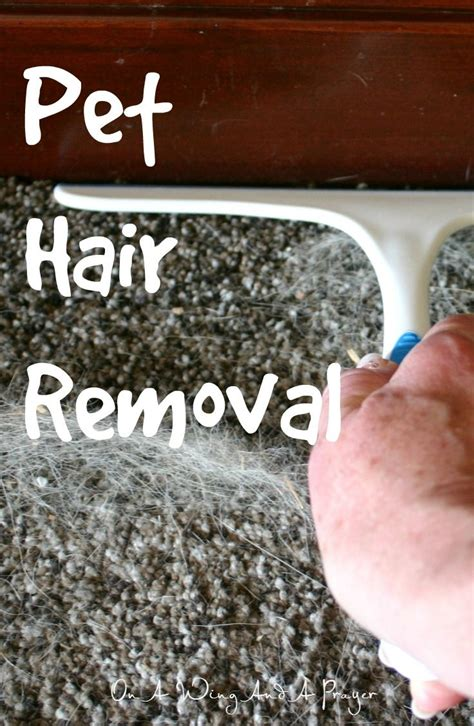 How To Remove Pet Hair From by 1000 Ideas About Remove Pet Hair On Cat