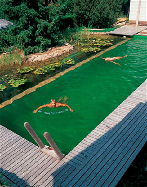 Backyard Pool Turning Green 5 Gross Ways To Save The Environment