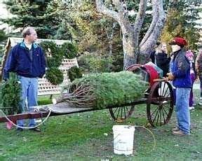dart s christmas tree farm southold ny kid friendly