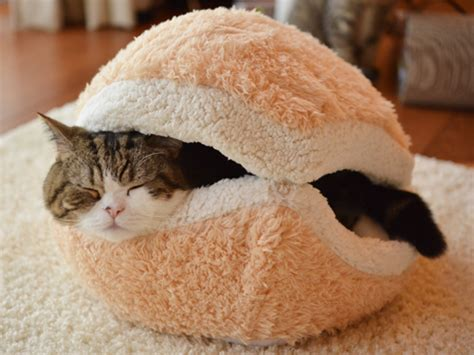 burger bett this cat burger bed will turn your cat into an adorable