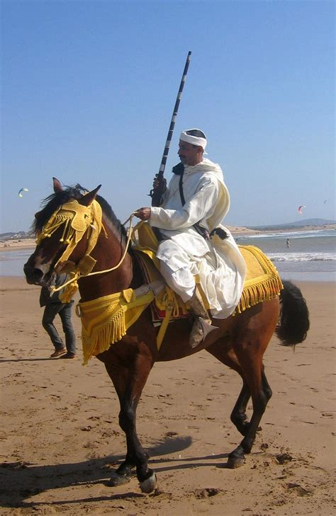 Wedding Attire For Horses by File Berber Horseman Proudly Showing And
