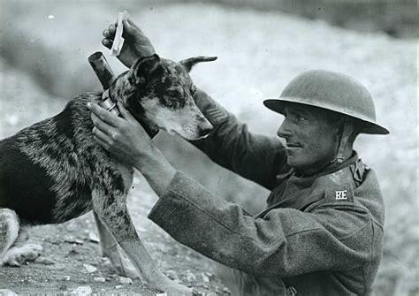animals in wartime – internationanimals