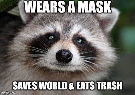 Meme Generator Raccoon - raccoon avenger imgflip