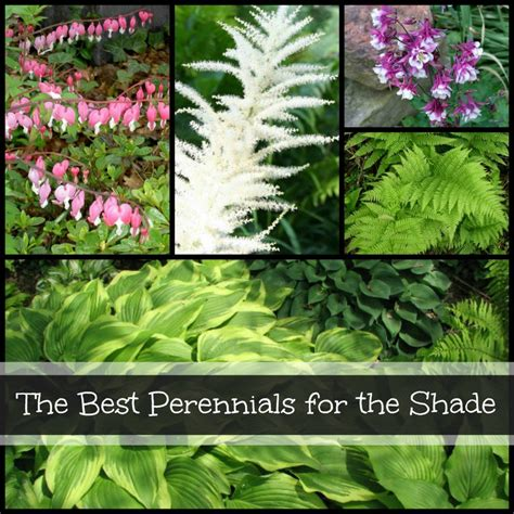 The Best Perennials For The Shade Dengarden Flowers For Shade Gardens