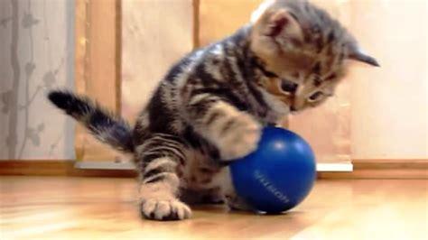 imagenes de videos chistosos gatos chistosos imagenes