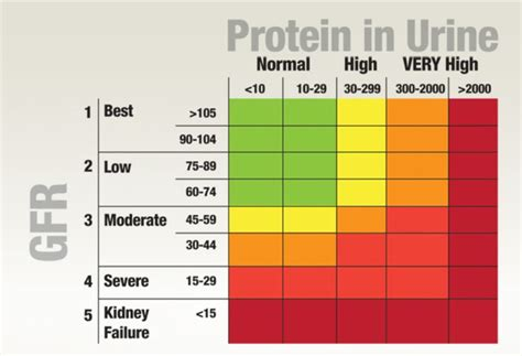 protein normal range 17 best images about protein in urine on