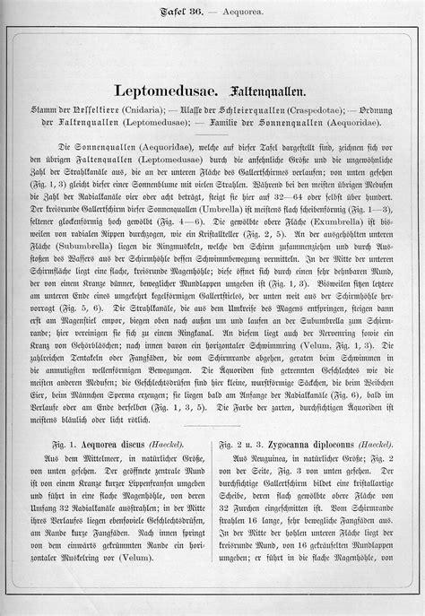 Ernst Haeckel: Kunstformen der Natur, Tafel 36