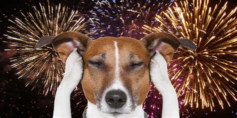 fireworks dogs 7 tips to protect your during fireworks wfmynews2