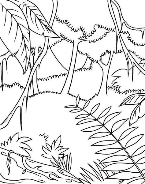 Easy Rainforest Coloring Pages by Simple Tropical Rainforest Coloring Page Coloring Pages