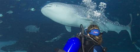 dive with whale sharks dive with whale sharks experience aquarium