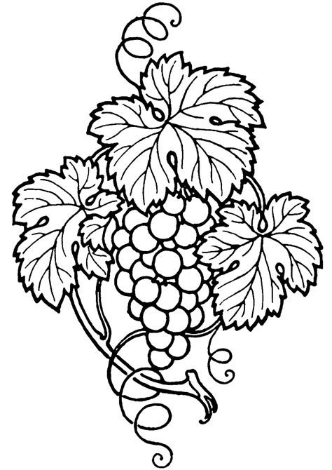 vine leaf coloring page grapes and wine clipart clipart panda free clipart images